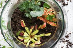 Terrarium géant plantes écosystème, boutique référente Lyon1 Un brin de folie , café botanqiue , atelier , créatif
