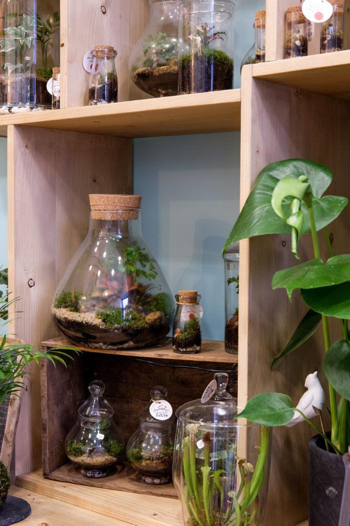 Terrarium XL Kokédama Un brin de folie monde miniature référence terrarium boutique spécialisée